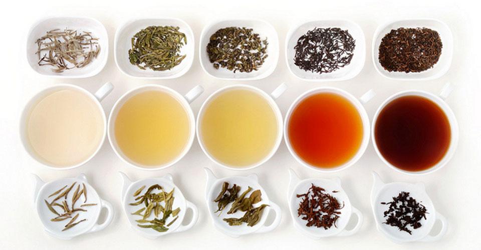 Lý do bạn nên uống trà hằng ngày