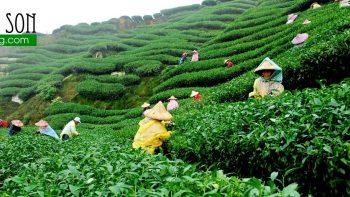 Permalink to: Xuất xứ trà Ôlong